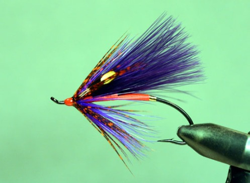 Spawning Purple Spey Fly