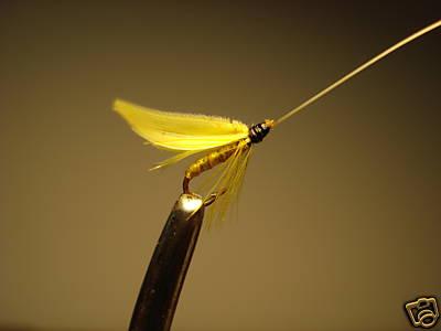 bergman_yellow_sally