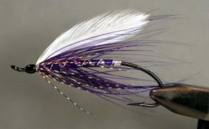 Purple Heron - Charlie Dickson